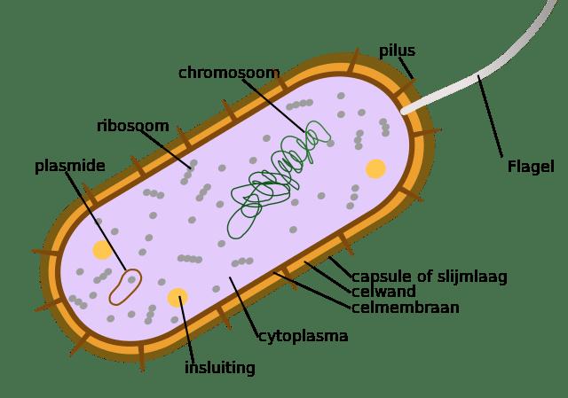 14 Caractéristiques distinctives des bactéries