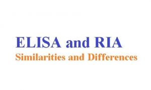 Elisa and Ria| Similarities & Differences between techniques