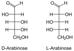 Monomer of Carbohydrates   Their Chemical Structure and Examples